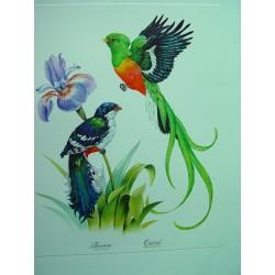 Jocororo y Quetzal Litografía