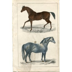 Animales. Race horse and Cart horse grabado publicado por A. Fullarton 1850