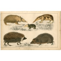 Animales. Editado por A. Fullarton, 1860