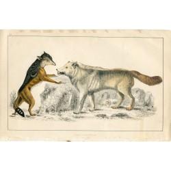 Animales.  Hiena salvaje. Editado por A. Fullarton 1860