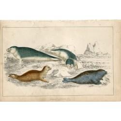 Animales de mar de los océanos. 1860