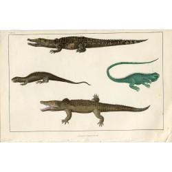 Animales. Cocodrilo del Nilo y otros editado por Fullarton 1860