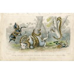 Animales. Anaconda, Pedda poda, Port natal pithon ....