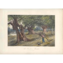 Estados Unidos. «At Burnham Beeches» Grabó Arthur Willmore (1814-1888) según obra de Birket Foster.